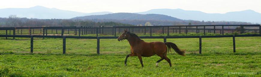 Horse running through field